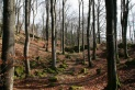 Eifelwald