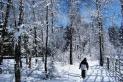schneifel im Winter