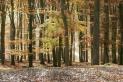 Eifelwald im Herbst